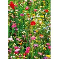 375 Flower Field