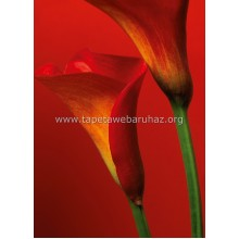 406 Red Calla Lilies