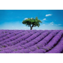 00144 Provence