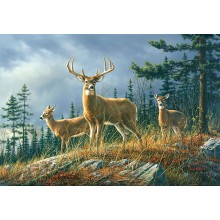 00151 Autumn Whitetails