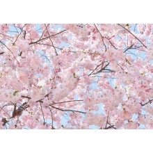 00155 Pink Blossoms