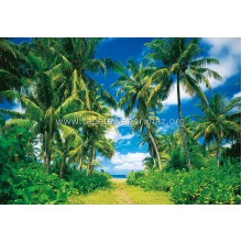 273 Island in the Sun