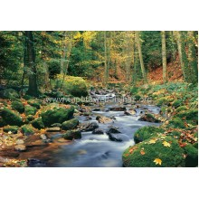 278 Forest Stream